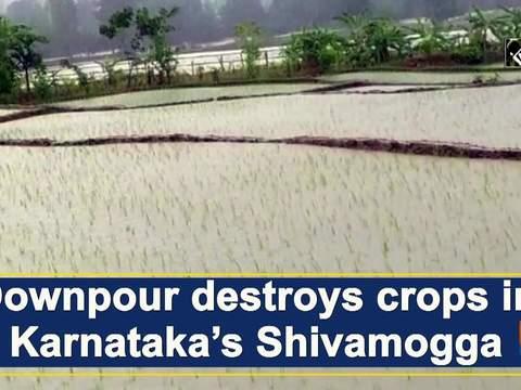 Downpour destroys crops in Karnataka's Shivamogga