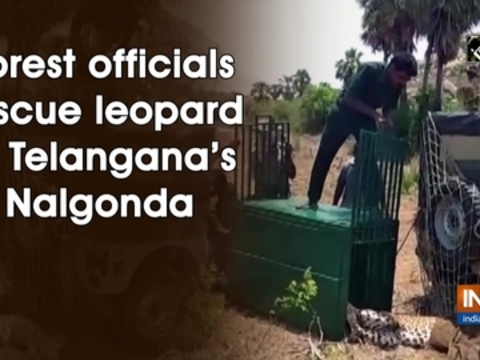Forest officials rescue leopard in Telangana's Nalgonda