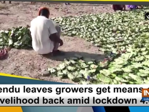 Tendu leaves growers get means of livelihood back amid lockdown 4.0