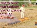 Farmers burn wheat stubble ahead of paddy plantation in Amritsar