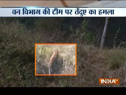 Saharanpur police launch hunt for leopard in UP