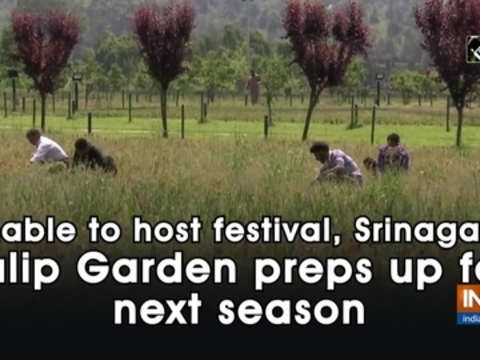 Unable to host festival, Srinagar's Tulip Garden preps up for next season