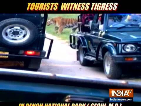 देखे,पर्यटकों का हुआ बाघ से सामना