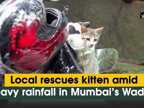 Local rescues kitten amid heavy rainfall in Mumbai's Wadala