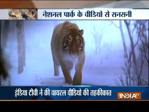 Aaj Ka Viral: How a man got surrounded by four tigers?