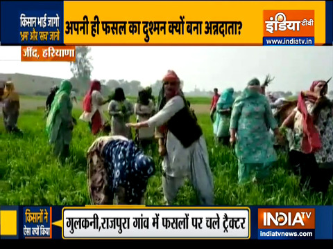 Farmers destroy their crops after BKU leader Rakesh Tikait's call