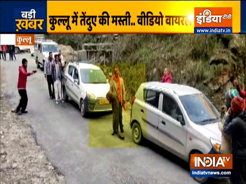 Watch: Wild leopard gels up with people on Kullu road