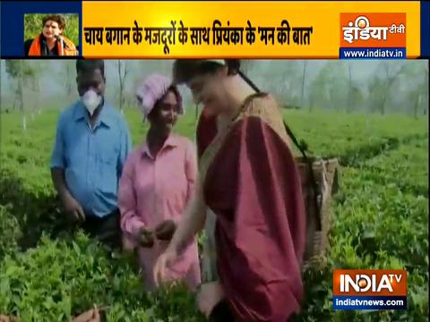 VIDEO: असम के चाय बागान में चाय की पत्तियां तोड़ती नजर आईं प्रियंका