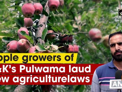 Apple growers of JandK's Pulwama laud new agriculture laws