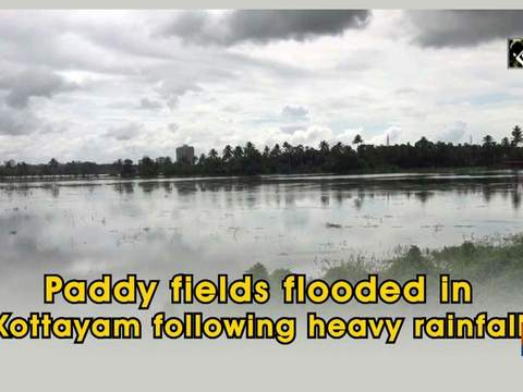 Paddy fields flooded in Kottayam following heavy rainfall