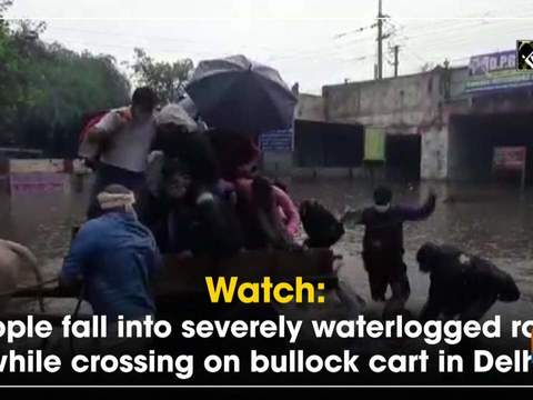 Watch: People fall into severely waterlogged road while crossing on bullock cart in Delhi