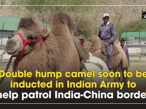 Double hump camel soon to be inducted in Indian Army to help patrol India-China border
