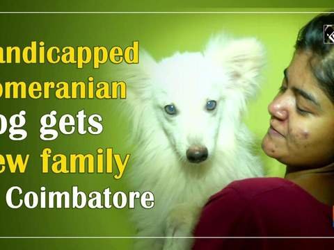 Handicapped Pomeranian dog gets new family in Coimbatore