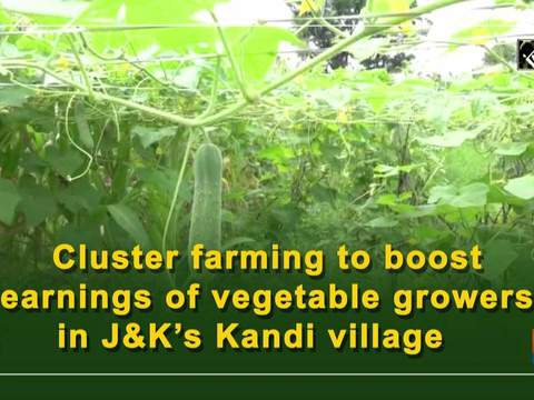 Cluster farming to boost earnings of vegetable growers in JandK's Kandi village