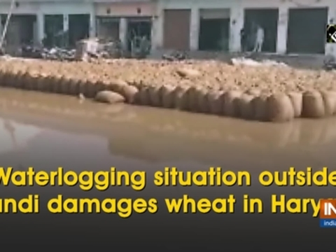 Waterlogging situation outside mandi damages wheat in Haryana