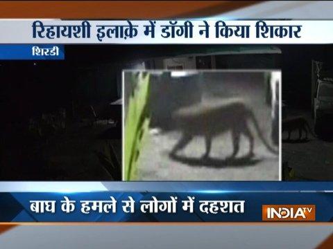 CCTV captured Tiger attacking dog in Shirdi