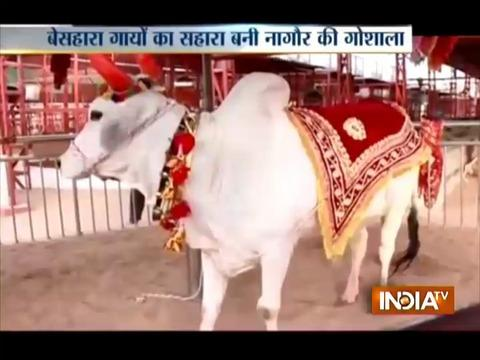 Aaj Ki Baat Good News: A cow shelter in Rajasthan that looks after injured and stray cows