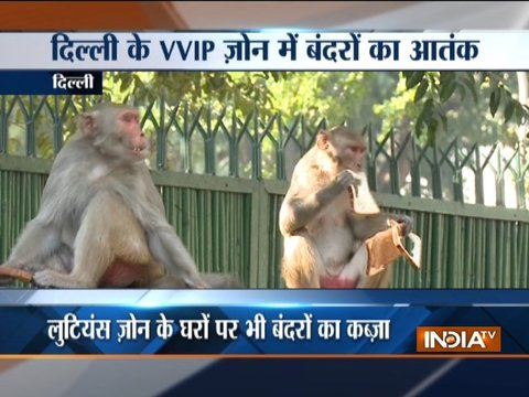 Monkeys invade Parliament, Lutyens Delhi