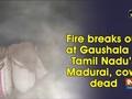 Fire breaks out at Gaushala in Tamil Nadu's Madurai, cows dead