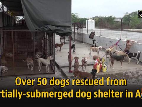 Over 50 dogs rescued from partially-submerged dog shelter in Agra