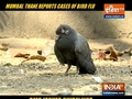 BMC issues guidelines to prevent bird flu outbreak after confirmed cases in Mumbai