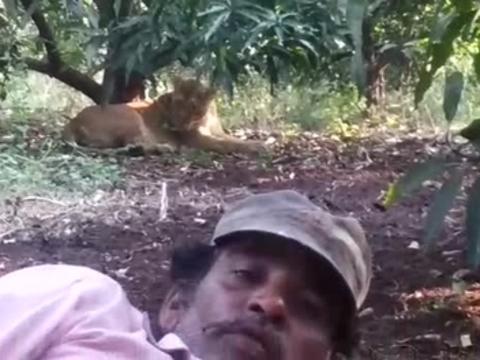 शेर के साथ सेल्फी लेने के चक्कर में शख्स ने दांव पर लगा दी जान, देखें ये वायरल Video