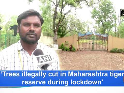 'Trees illegally cut in Maharashtra tiger reserve during lockdown'