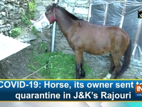 COVID-19: Horse, its owner sent to quarantine in J&K's Rajouri