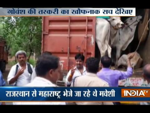 MP Police rescues cattles being smuggled for slaughtering