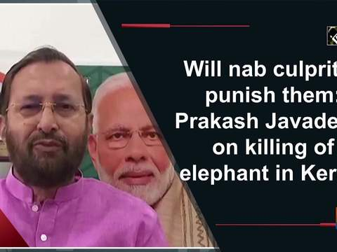 Will nab culprits, punish them: Prakash Javadekar on killing of elephant in Kerala