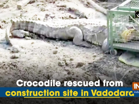 Crocodile rescued from construction site in Vadodara