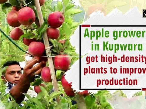Apple growers in Kupwara get high-density plants to improve production
