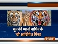 Last minutes of killed tigress Avni