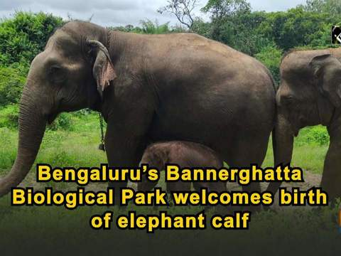 Bengaluru's Bannerghatta Biological Park welcomes birth of elephant calf