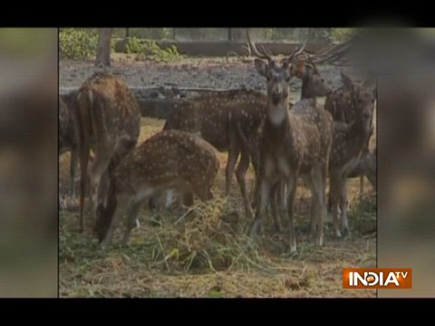 जमशेदपुर के चिड़ियघर में जानवरों को गर्म रखने के लिए लगाए गए हीटर