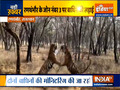 VIDEO:  Fight between tigress Riddhi and Siddhi in  Rajasthan's Ranthambore