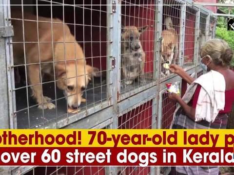 Motherhood! 70-year-old lady pets over 60 street dogs in Kerala
