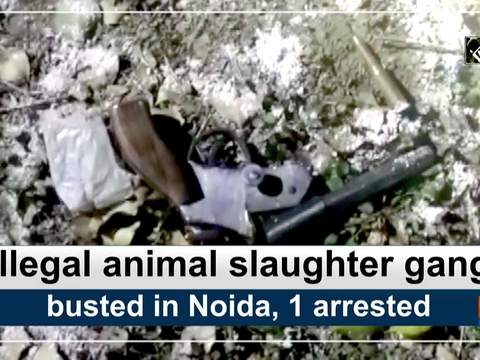 Illegal animal slaughter gang busted in Noida, 1 arrested