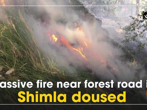 Massive fire near forest road in Shimla doused