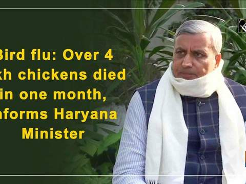 Bird flu: Over 4 lakh chickens died in one month, informs Haryana Minister