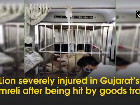 Lion severely injured in Gujarat's Amreli after being hit by goods train