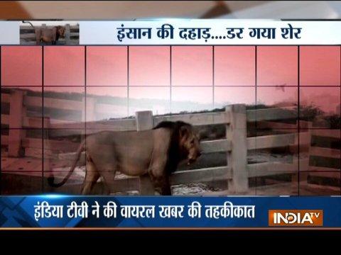 Aaj ka Viral: Who dare to challenge the lion of the jungle?