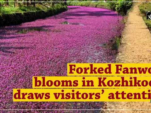 Forked Fanwort blooms in Kozhikode, draws visitors' attention