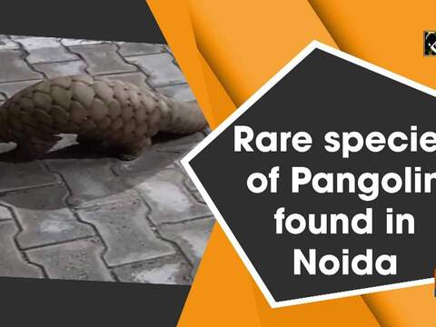 Rare species of Pangolin found in Noida