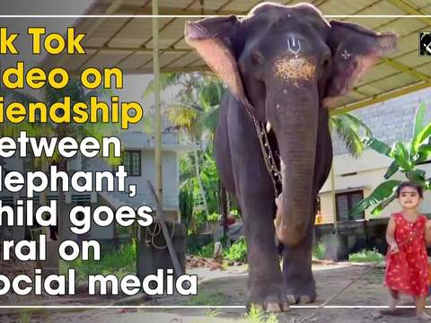 Tik Tok video on friendship between elephant, child goes viral on social media