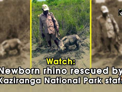 Watch: Newborn rhino rescued by Kaziranga National Park staff