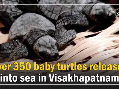 Over 350 baby turtles released into sea in Visakhapatnam