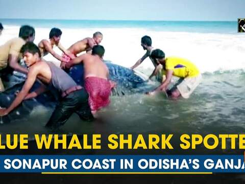 Blue whale shark spotted at Sonapur coast in Odisha's Ganjam