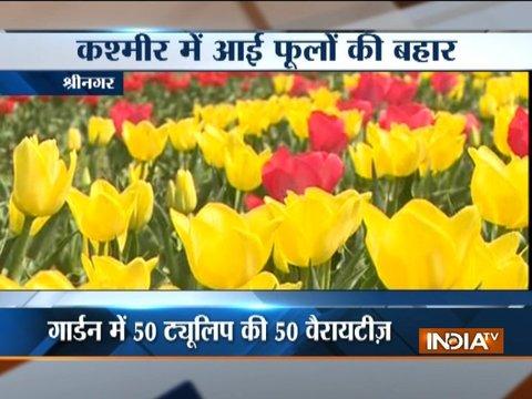 Asia's largest Tulip garden in Srinagar open to public