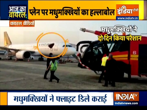 Aaj Ka Viral: Honeybees land on aircraft before passengers board